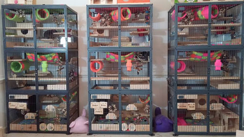 Ferret Nation Chinchilla Cage